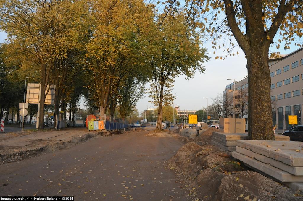 Bomen letterlijk in de weg...